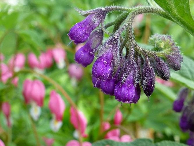 Ethnobotany and Secret of Plants