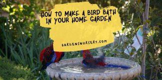 How to Make a Bird Bath in your Home Garden