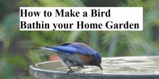 How to Make a Bird Bathin your Home Garden