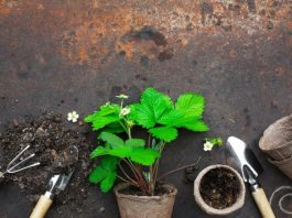 How to Prepare Soil Mix for my Aroid Plants