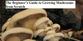 The Beginner's Guide to Growing Mushrooms from Scratch