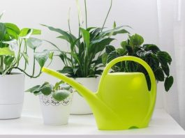 Watering The Houseplants-Good Practices
