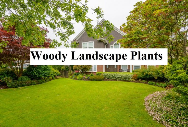 Woody Landscape Plants