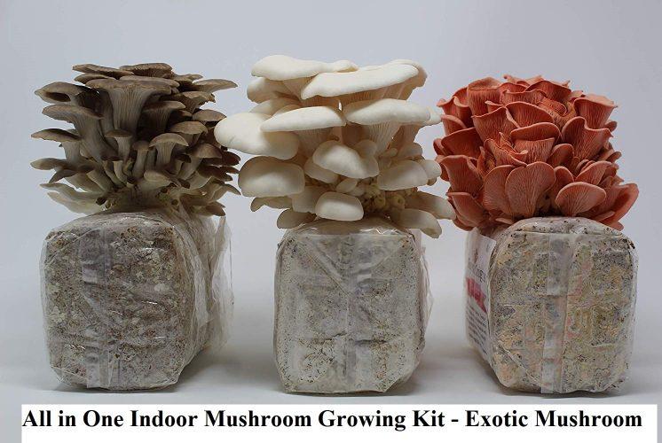 All in One Indoor Mushroom Growing Kit - Exotic Mushroom