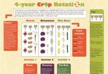 Vegetable Rotation in your Garden