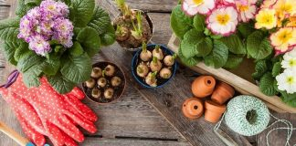 All About Beautiful Flower Bulbs