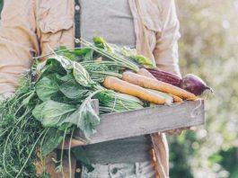 Fall Gardening in your Home Garden