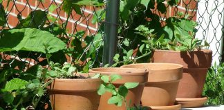 09 Tips and Reasons For Terracotta Pots