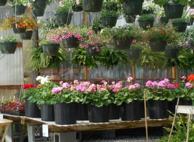 Best 10 Tips For Navigating The Nursery Plants