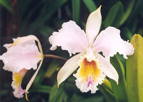 Caring for Most Types of Orchids