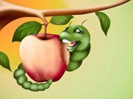 Fruit Tree Pests