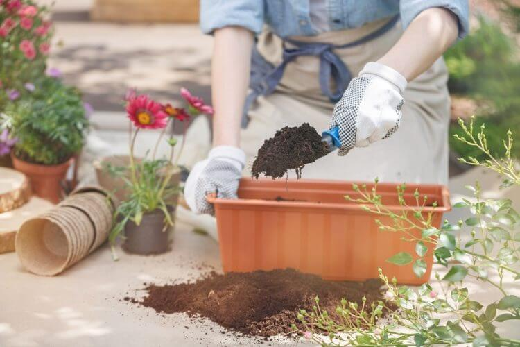 Best 41 Garden Tips You Can Use