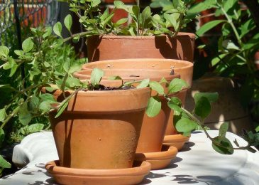 Tips And Reasons For Terracotta Pots