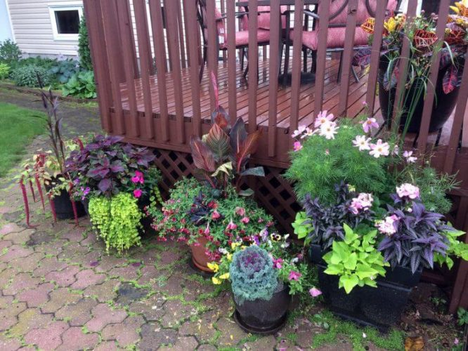 10 Tips for Container Gardens