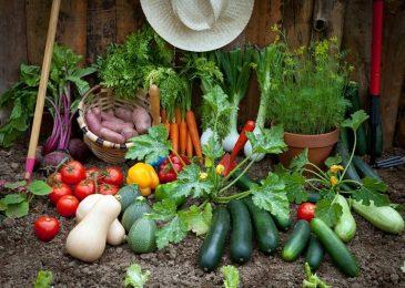 Best Veggies to Grow in your Home Garden