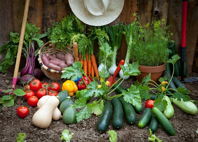 Best Veggies to Grow in your Home Garden