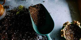 The Organic Way to Fertilize your Garden
