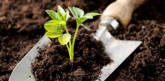 Buy Organic Fertilizers - The Best Way