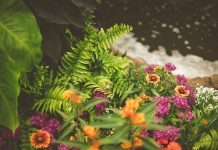 Horticulture And Ornamental Plants