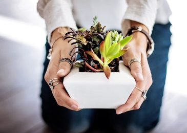 How to Care Succulents Indoors
