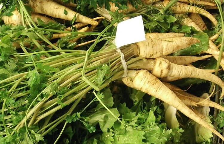 Plant Parsnips for Winter Picking
