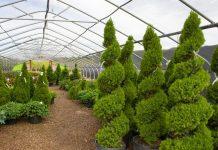State Certified Landscape Nursery Trees