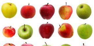 The top 10 apple varieties