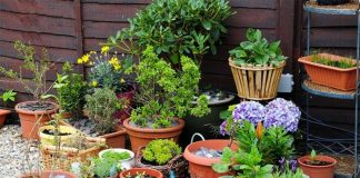 06 Gardening Trends to Watch and Try in 2020