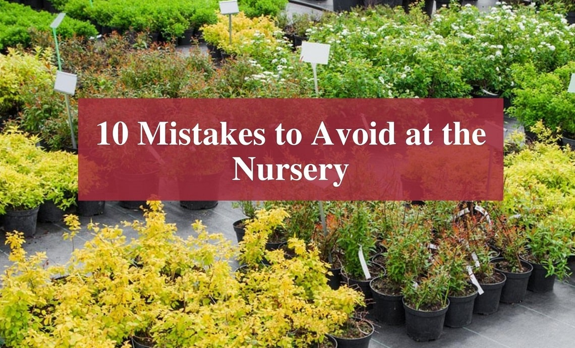 10 Mistakes to Avoid at the Nursery