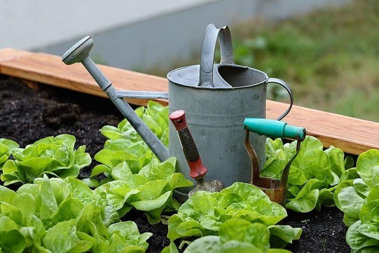 5 Downsides to Gardening