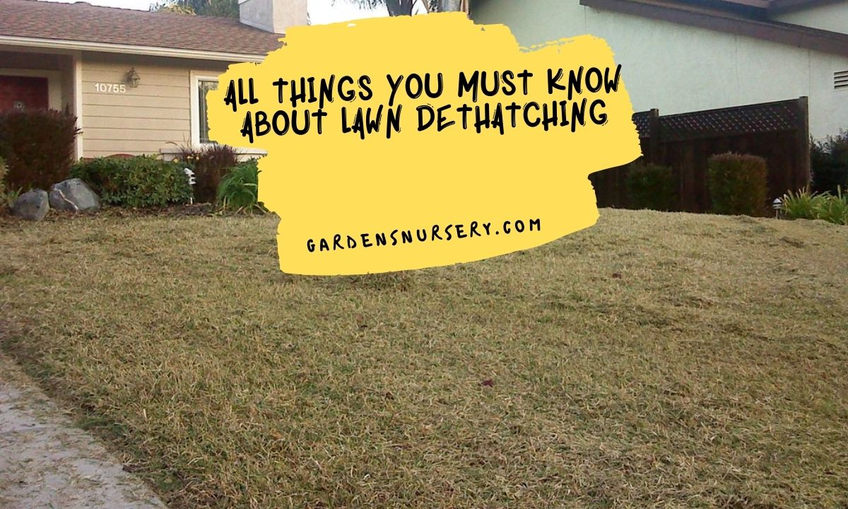 All Things You Must Know About Lawn Dethatching