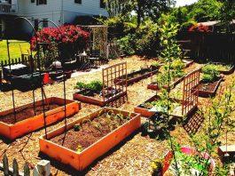 Best Vegetable Garden Layout Ideas and Designs
