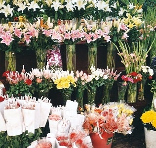 Buying Flowers in Bloom