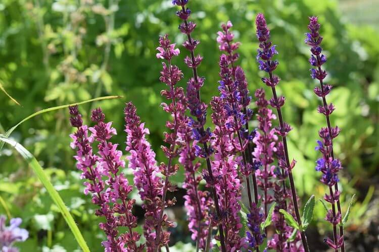 Easy to Grow Beautiful Perennial Plant