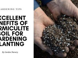 Excellent Benefits of Vermiculite Soil for Gardening Planting