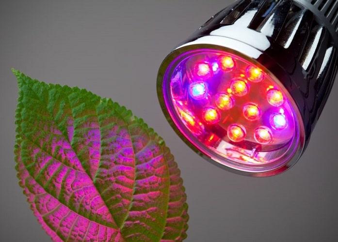 Grow Light Bulbs For Indoor Plants: Enjoy Year-Round Gardening!