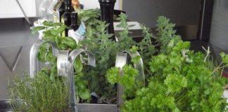 Grow your Own Herbal Tea