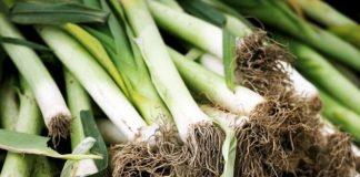 Growing Leeks in your Garden - Vegetable Gardening