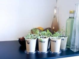 Growing Vegetables Indoors Make Your Grocery Store