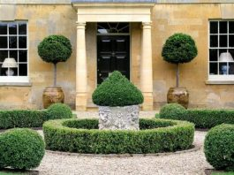 How to Create an Elegant Topiary in your Garden