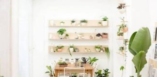 Indoor Gardening the Feng Shui Way