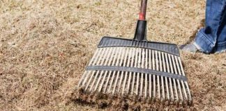 ALL ABOUT LAWN DETHATCHING