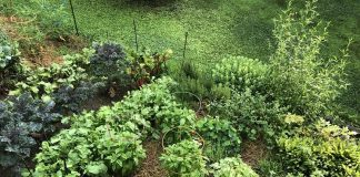 Most Organic Vegetable Gardening Tips for Beginners