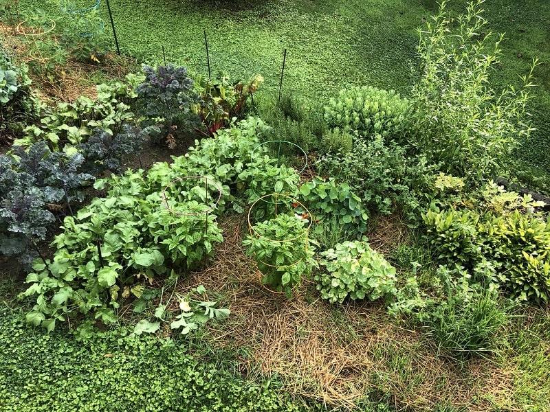 Most Organic Vegetable Gardening Tips For Beginners