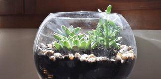 Terrariums - Beautiful Indoor Projects in your House