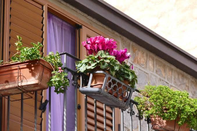 Top Secrets of Winning Window Boxes