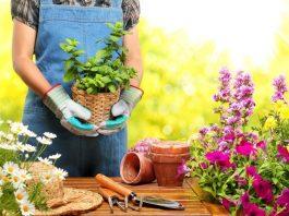 Useful House Gardening Tips For Beginners
