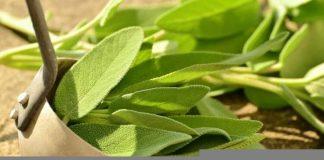 Add Versatile Sage to your Herb Garden