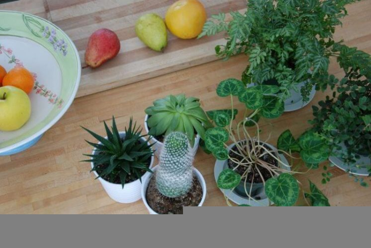 What To Do (And Not Do) With Your New Plant