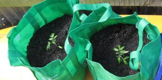 Why You Should Use Grow Bags in Your Garden